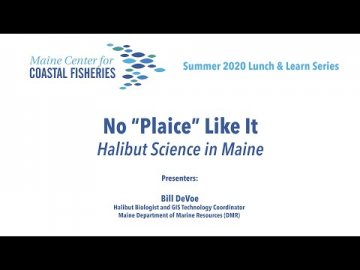Lunch & Learn: No 'Plaice' Like It: Halibut Science in Maine