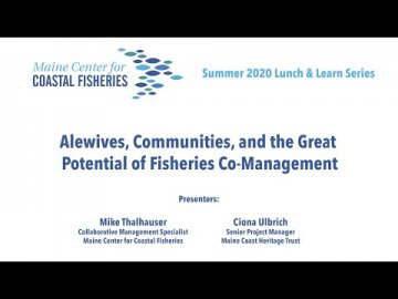 Lunch & Learn: Alewives, Communities, and the Great Potential of Fisheries Co-Management